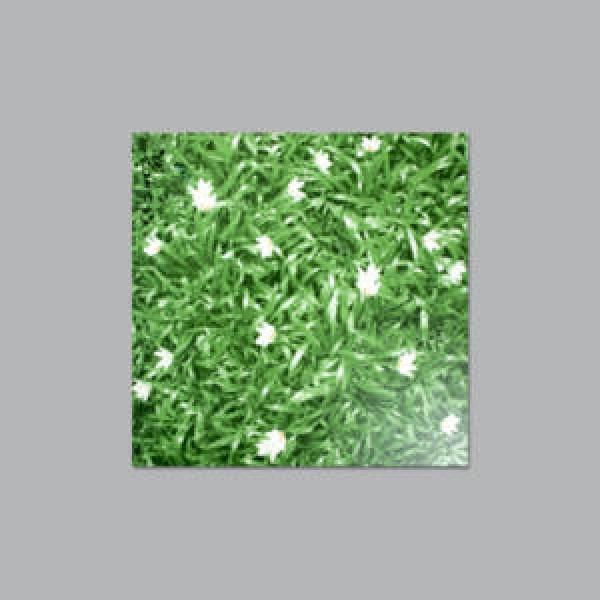 Garden Tile 16 x 16